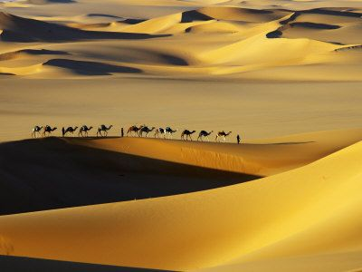-johnny-tuareg-nomads-with-camels-in-sand-dunes-of-sahara-desert-arakou.jpg